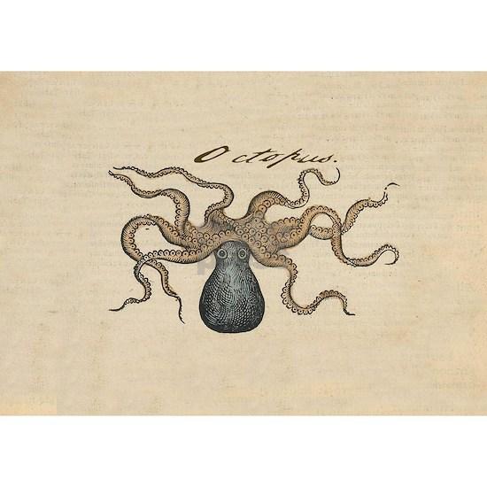 Octopus Kraken vintage scientific illustration