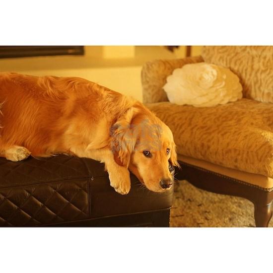 golden retriever relaxing nala on ottoman