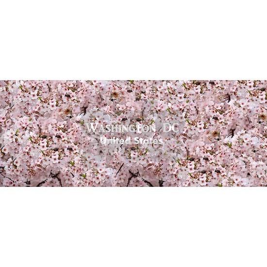 WashingtonDC_37.5x15_CherryBlossoms_TidalBasin_Sca