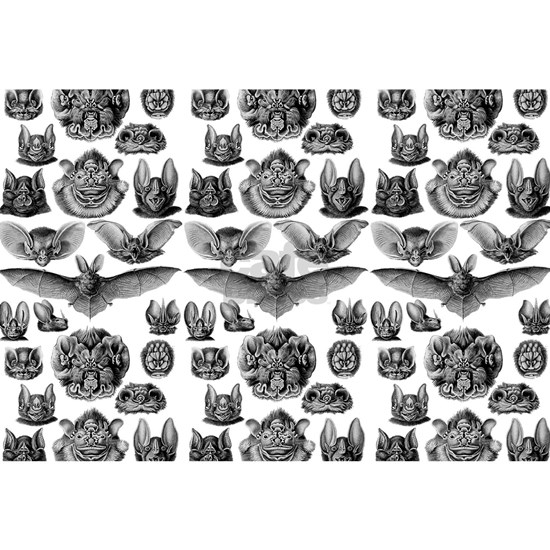 1904 Haeckel Chiroptera