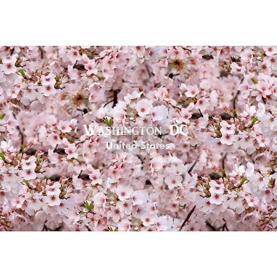 WashingtonDC_18.8x12.6_CherryBlossoms_Bag