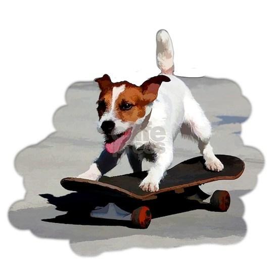 Jack Russel Terrier on Skateboard