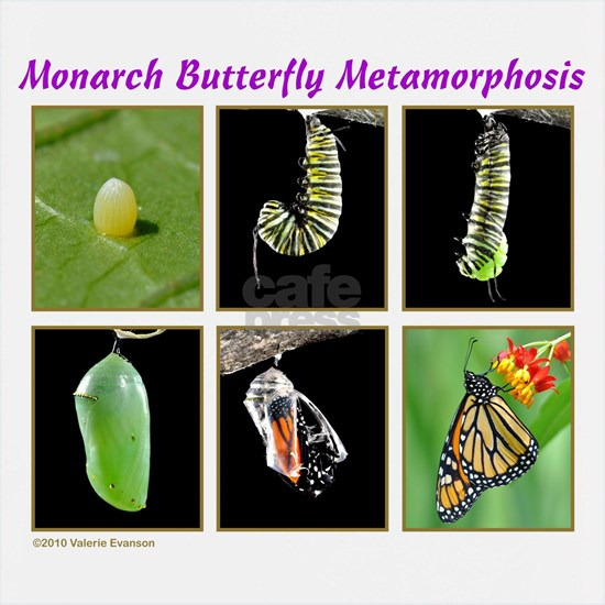 Monarch Metamorphosis Clothes 3