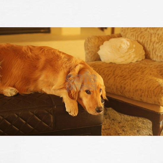 golden retriever relaxing nala on ottoman