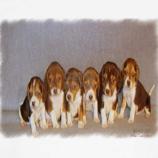 Puppies Beagle