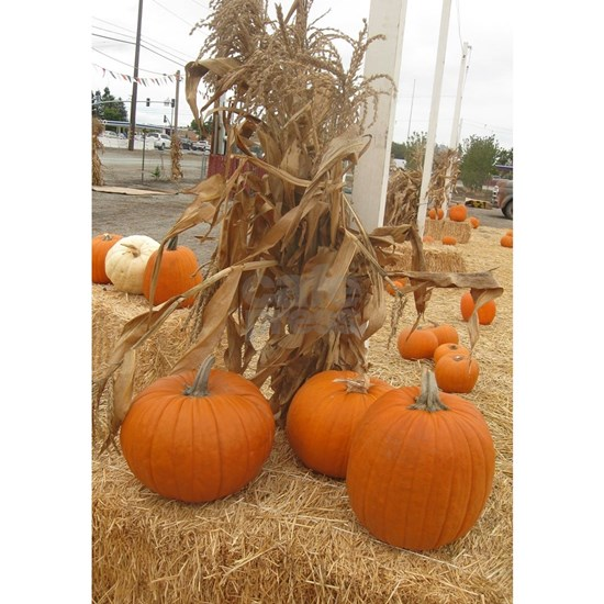 country orange pumpkin stalk on hay stack