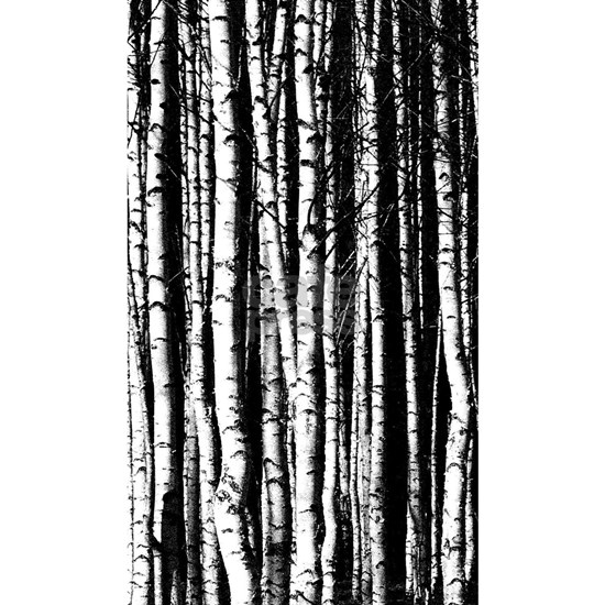 Artistic Birch Trees in black and white