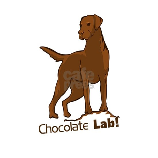 chocolate lab!
