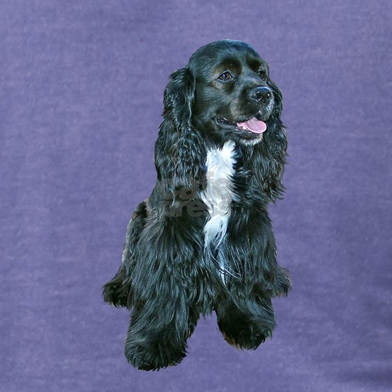Cocker Spaniel - black w-white chest