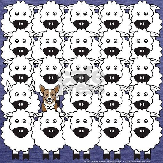 Corgi in the Sheep