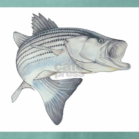 Lunker's Stripe Bass