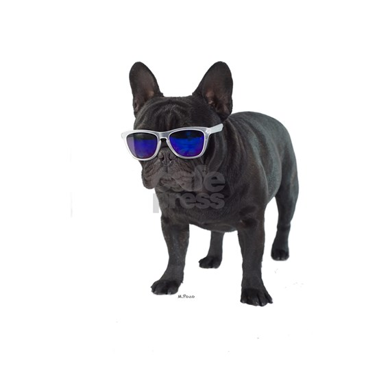French Bulldog with sun glases