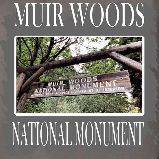 Muir Woods California Tshirt T Shirt Tee