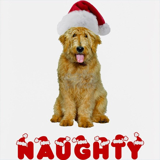 Naughty Goldendoodle