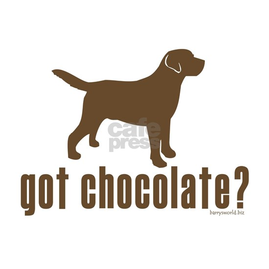 got_chocolatelabradorretriever1