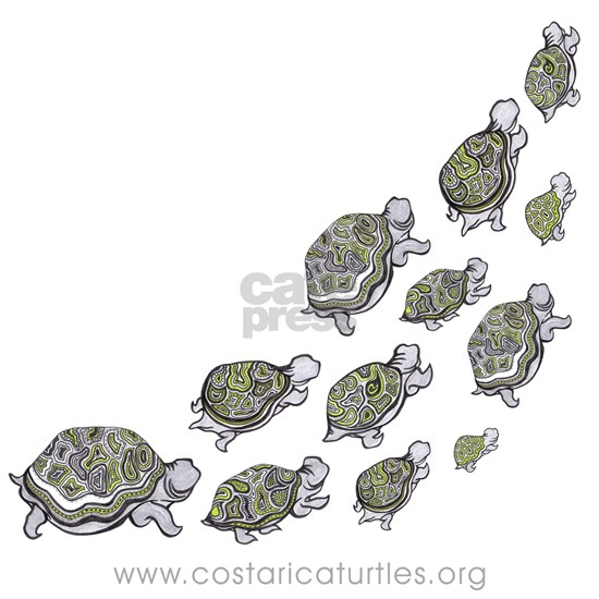 Turtles Illustration