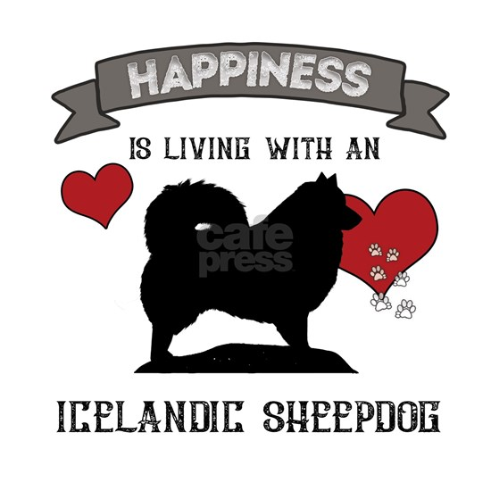 Happiness is living with an Icelandic Sheepdog