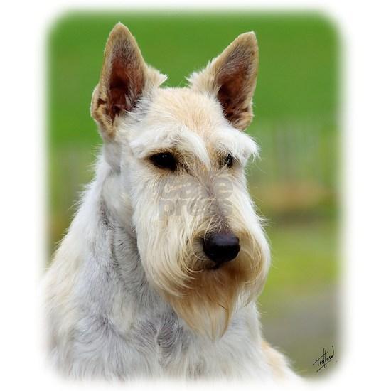 Scottish Terrier AA063D-101