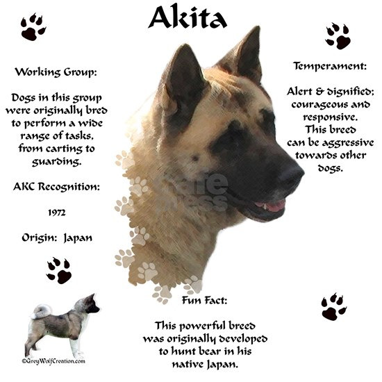 Akita 1