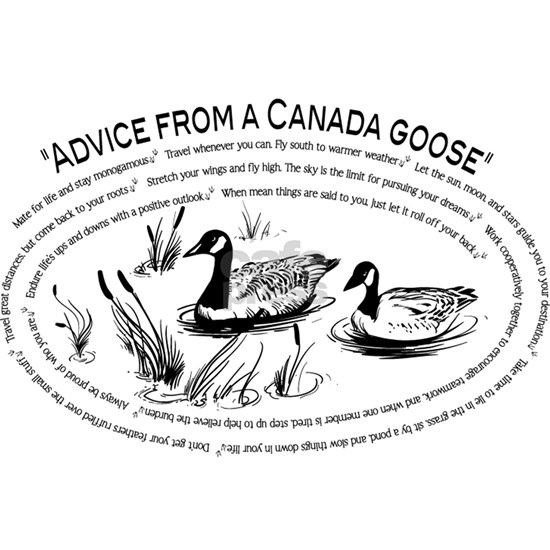 Advice From A Canada Goose