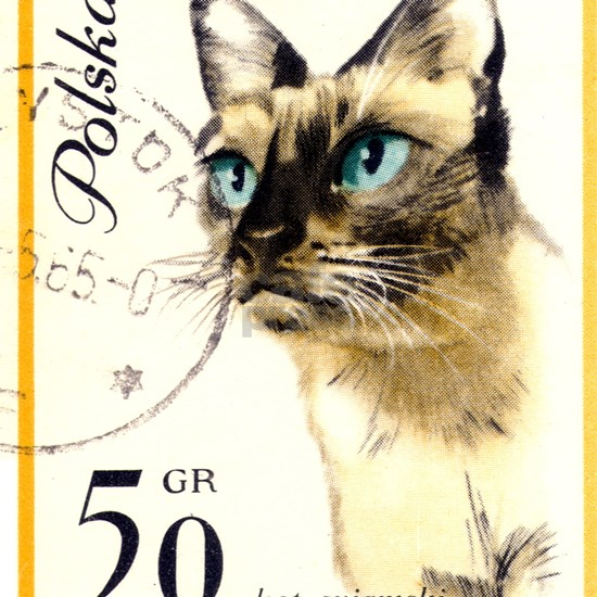 1964 Poland Siamese Cat Postage Stamp