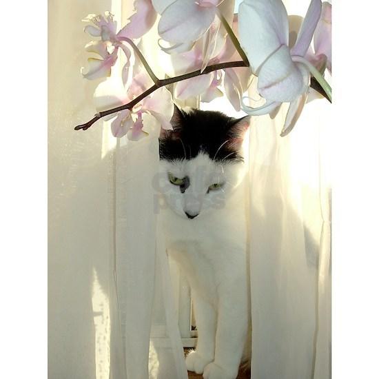 White and Black Kitty Cat