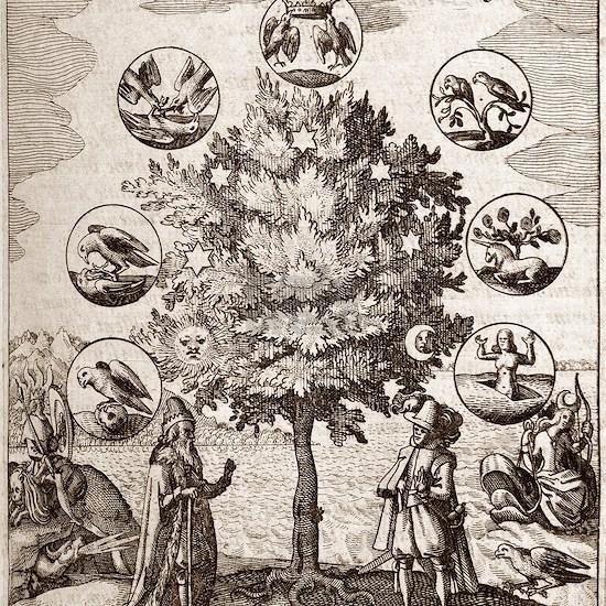 Alchemical tree, Philosophia reformata