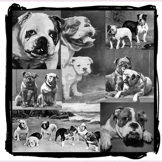 bulldog collage corrected edge