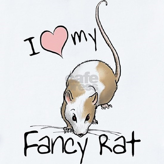 fancy-rat-new