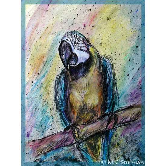 Blue/gold macaw! Bird art!