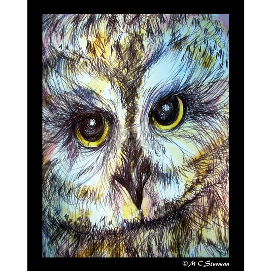 Owl, wildlife art!