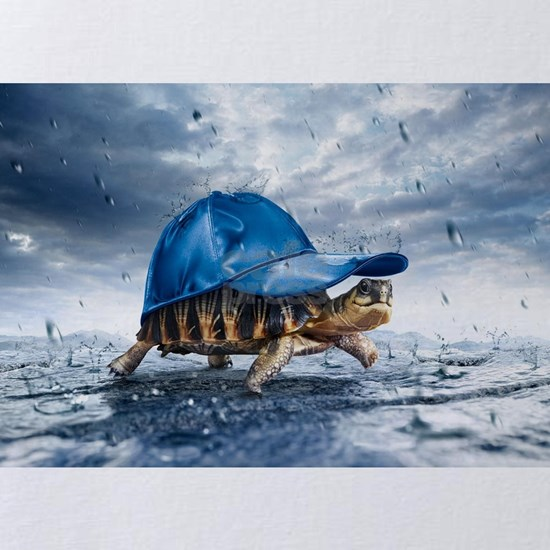Turtle With Cap