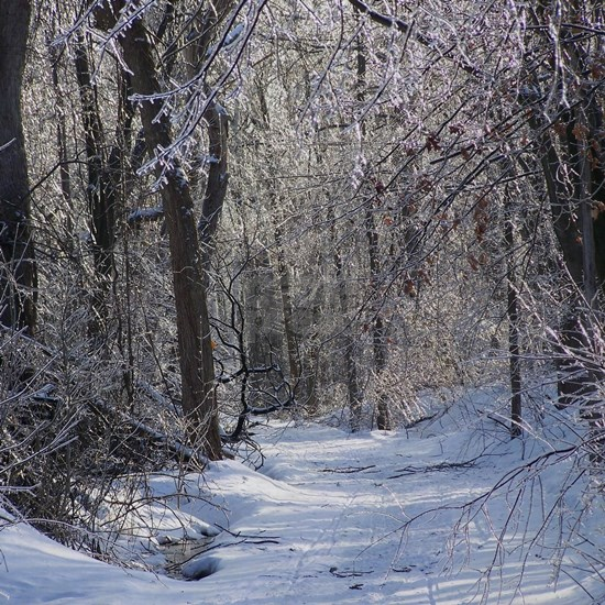 Icy Snow Trail