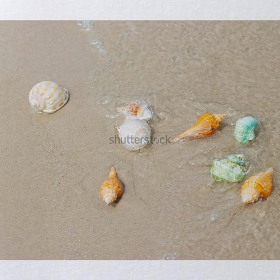 Beach summer with Shells on sandy beach with sand