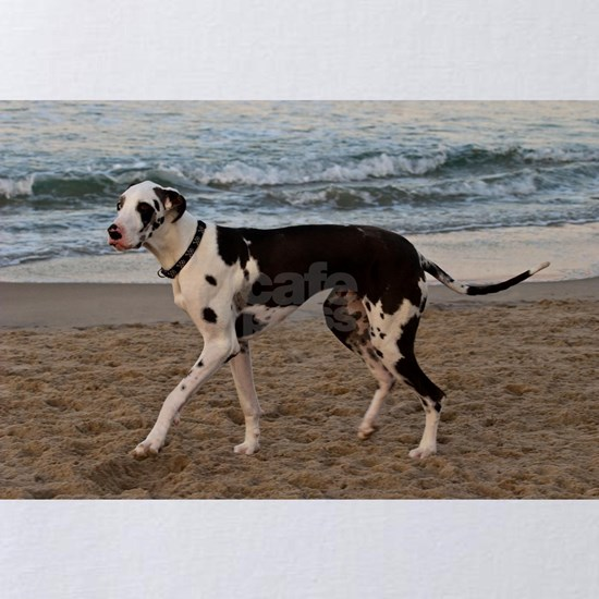Great Dane 8