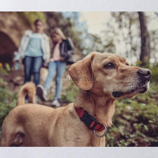 Small yellow Dog on a forest trail with a people w