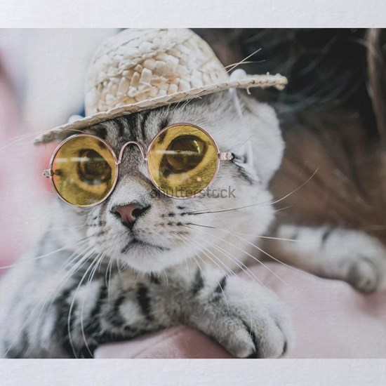 cute grey cat with sunglasses and hat - selective