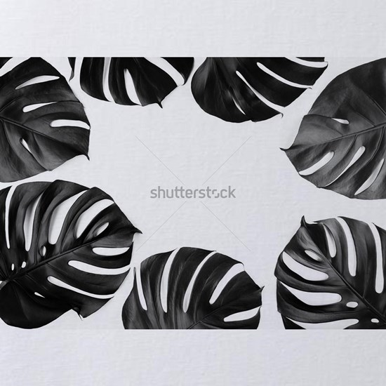 Creative floral layout of tropical monstera leaves