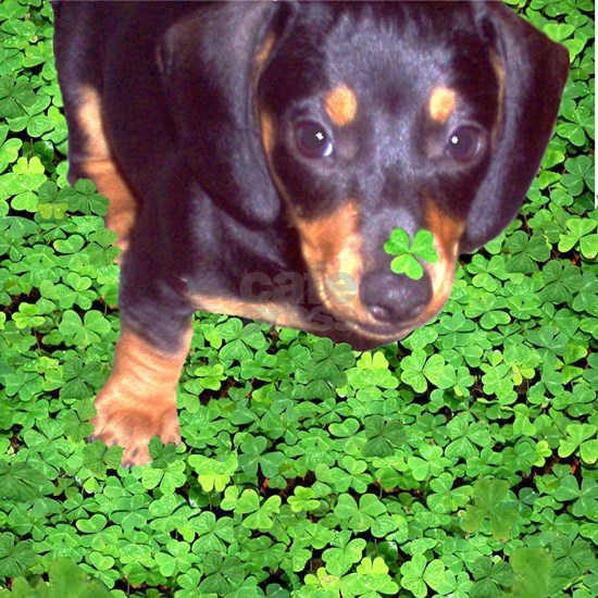 Lily Dachshund Dog in the Clover