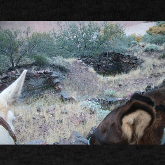 Bright Angel Mule Ride To Phantom Ranch Anasazi In