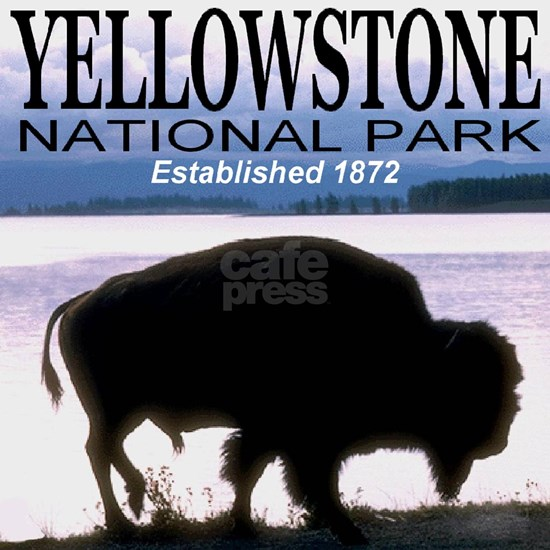 bison_yellowstone_national_PARK