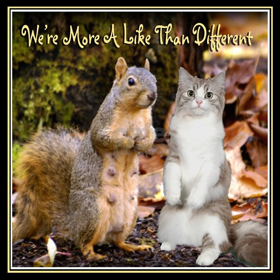 Squirrel and Cat are Alike