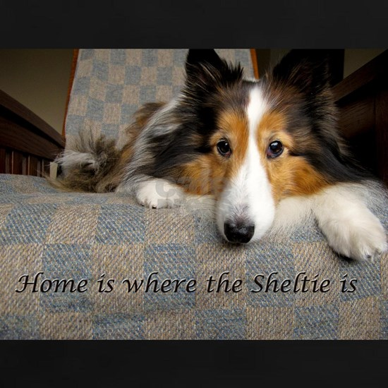 Home is where the Sheltie is