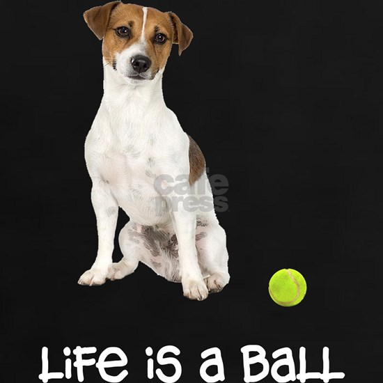 Jack Russell Terrier Life
