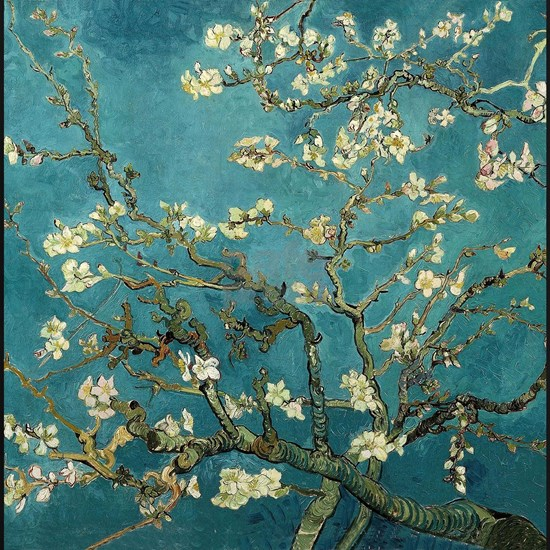 Almond Branches in Bloom 2sc