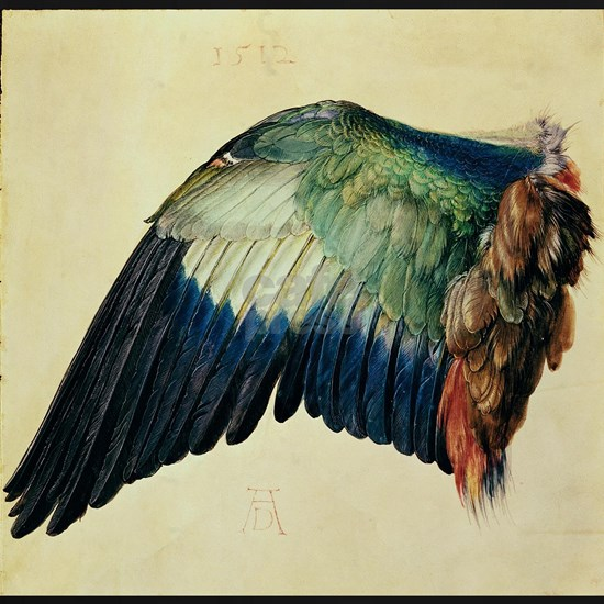 Wing of a Blue Roller, 1512 w/c on vellum with