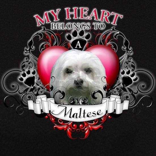 My Heart Belongs to a Maltese