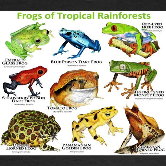 Frogs of the Tropical Rainforest