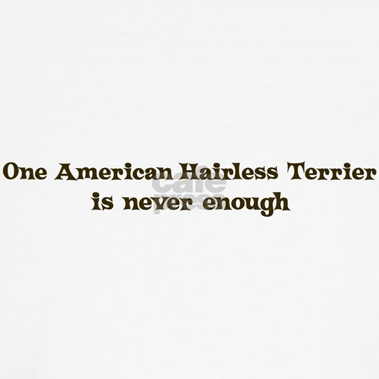 One American Hairless Terrier