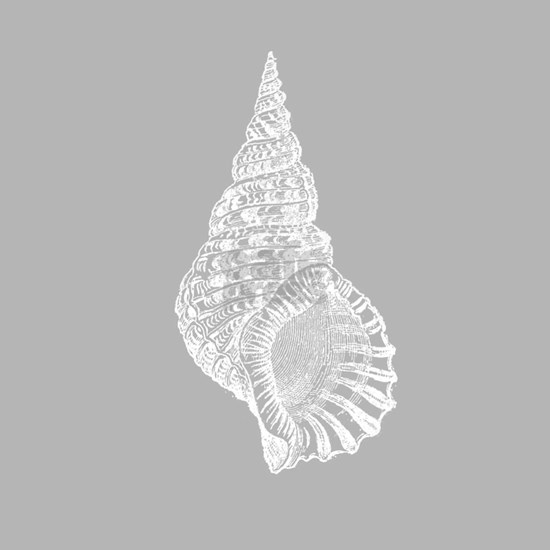 Grey Conch shell